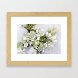 Spring white 044 Framed Art Print