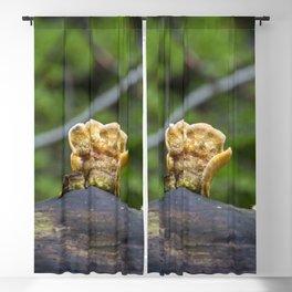 Fungal remains Blackout Curtain