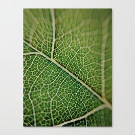 Veins of a leaf Canvas Print