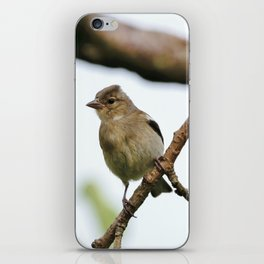 Young Chaffinch Songbird Bird Perching on a Branch - Wales, UK iPhone Skin