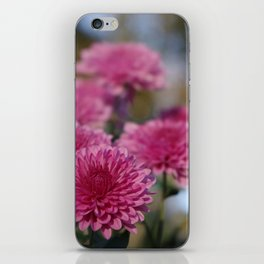 Rosy Chrysanthemum with gold leaves, blue sky iPhone Skin