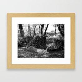 Heligan giant in monochrome Framed Art Print