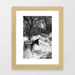 Turkish Donkey Framed Art Print
