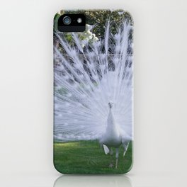 Magnificent White Peacock in the Garden of Isola Bella in Italy iPhone Case