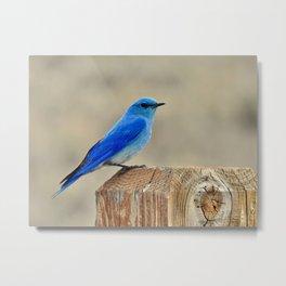 Mt. Blue Bird  Metal Print