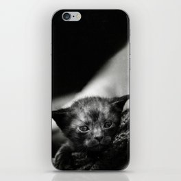 Yoda Kitten iPhone Skin