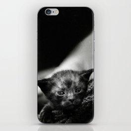 Yoda Kitten iPhone Skin