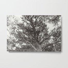 Growth | Estes Park, Colorado Metal Print