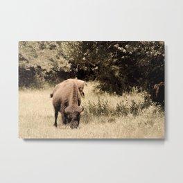 Bison Roaming the Great Plains Metal Print