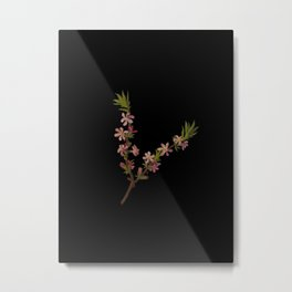 Amygdalus Nana Mary Delany Delicate Paper Flower Collage Black Background Floral Botanical Metal Print