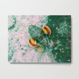 Flasher Scorpionfish Metal Print