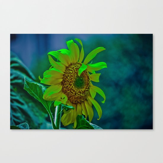 The Moody Flower Canvas Print