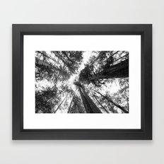 Muir Woods - California Framed Art Print
