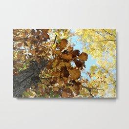 Autumn Brown Metal Print