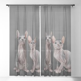 Drawing two cats Sphynx, hairless Sheer Curtain