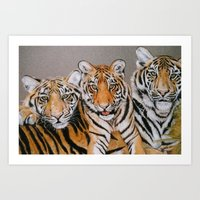 Three Tigers Art Print