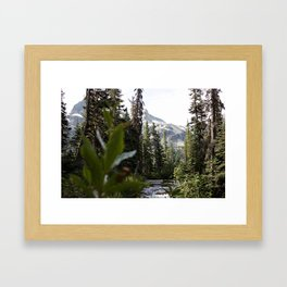 Into the Wild while in Whistler Canada Framed Art Print