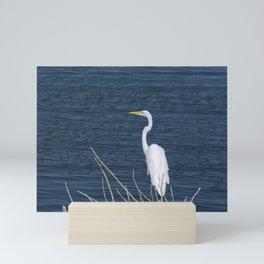 Single Great White Egret standing on lake shore Mini Art Print