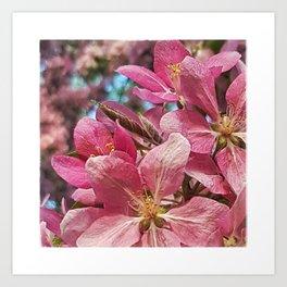 Pretty Pink Crabapple Flowers Art Print