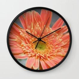 Barbeton Apricot-Melon Daisy Wall Clock