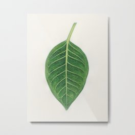 Ficus benghalensis Metal Print