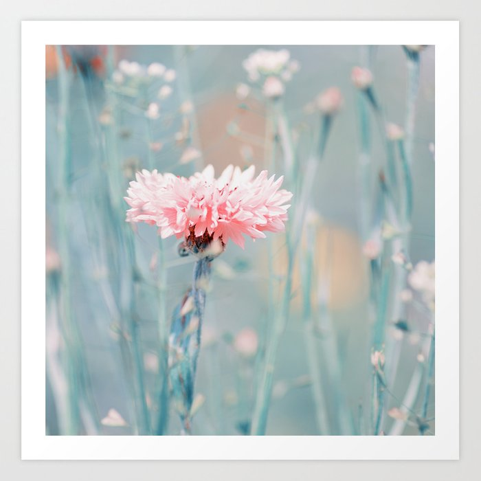 Pink pastel cornflower Art Print