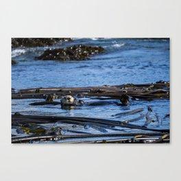 Sea Otter Canvas Print