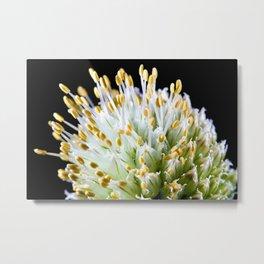 White onion flower Metal Print