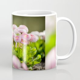 Bellis perennis pomponette called daisy Coffee Mug