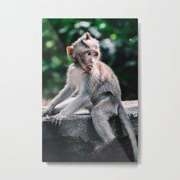 Cheeky baby monkey   Bali   Travel photography Metal Print