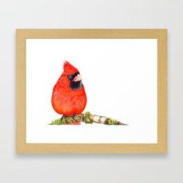 Mr Cardinal Framed Art Print