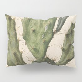 Herman Saftleven - Blooming prickly pear cactus (1683) Pillow Sham