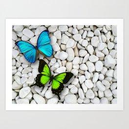 Blue & Green butterfly sitting on white stones Art Print