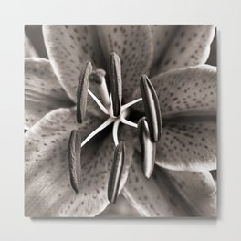 Lilly - Duplex Metal Print