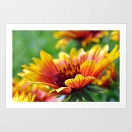 Arizona Sun Flower in the Morning Sun Art Print