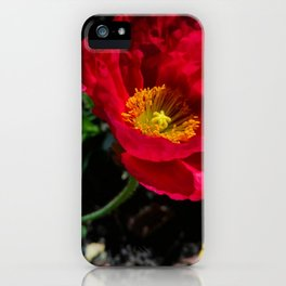 Anemone closeup, 2019 from Roberta Winters Photography iPhone Case
