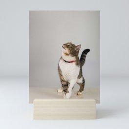 curious cat looking up Mini Art Print