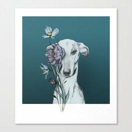 Greyhound Floro blue Canvas Print
