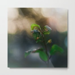 Dreamy Morning. Metal Print