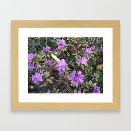 Stunning Azaleas In Brush Strokes Framed Art Print