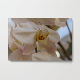 White Peabody Orchid II Metal Print