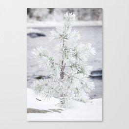 Snowy small tree Canvas Print