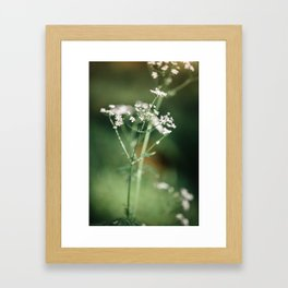 Cow parsley in the meadow Framed Art Print