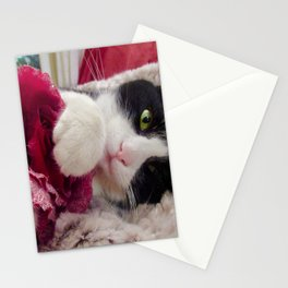 Orazio very sweet cat Stationery Cards