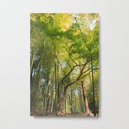Greenish Tree Metal Print