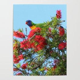 Rainbows and Brushes - Australian Lorikeet Poster