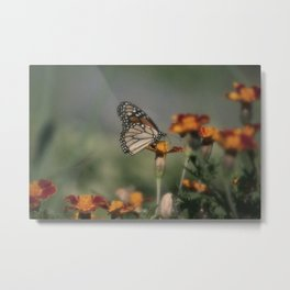 Monarch Butterfly XV Metal Print