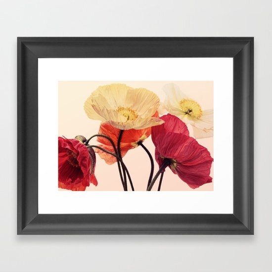Posing Poppies - bright, vintage toned poppy still life Framed Art Print