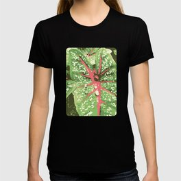 Caladium Calypso - The Garden Series T-shirt
