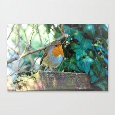 Curious Robin Canvas Print